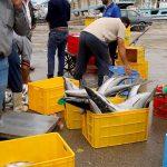باسلام | Basalam - بازار ماهی فروشان آبادان