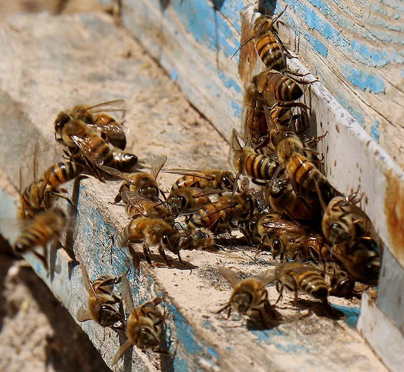 باسلام basalam_ تولید عسل