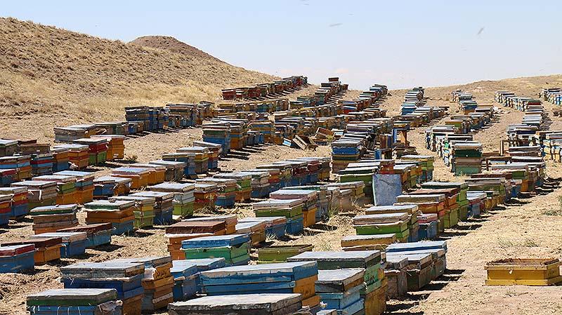 باسلام|basalam- تولید عسل