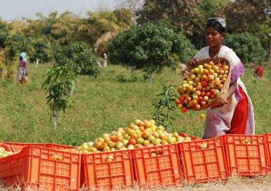 بازار باسلام - basalam - وبلاگ باسلام - مهاجرت به روستا