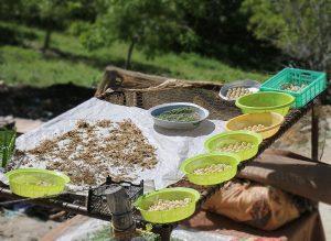بازار باسلام   basalam - روستای چین