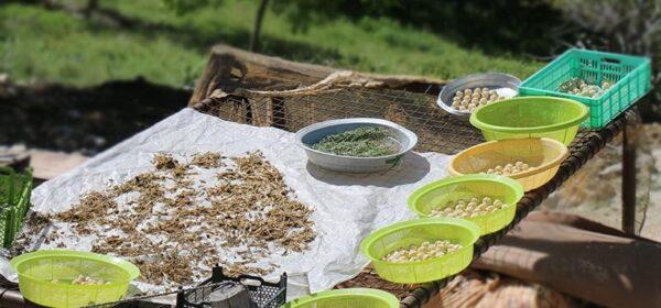 بازار باسلام | basalam - روستای چین