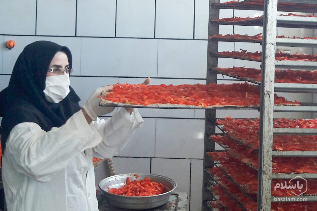 تولید پودر فلفل دلمه ای-محصولات خشک-مجله باسلام