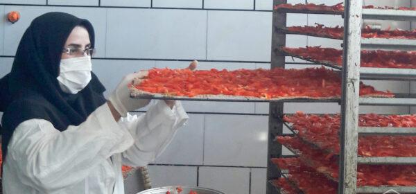 مراحل خشک کردن فلفل دلمه ای و تولید محصول خشک