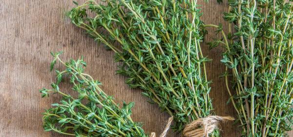 گیاه آویشن- خواص دمنوش آویشن-مجله باسلام