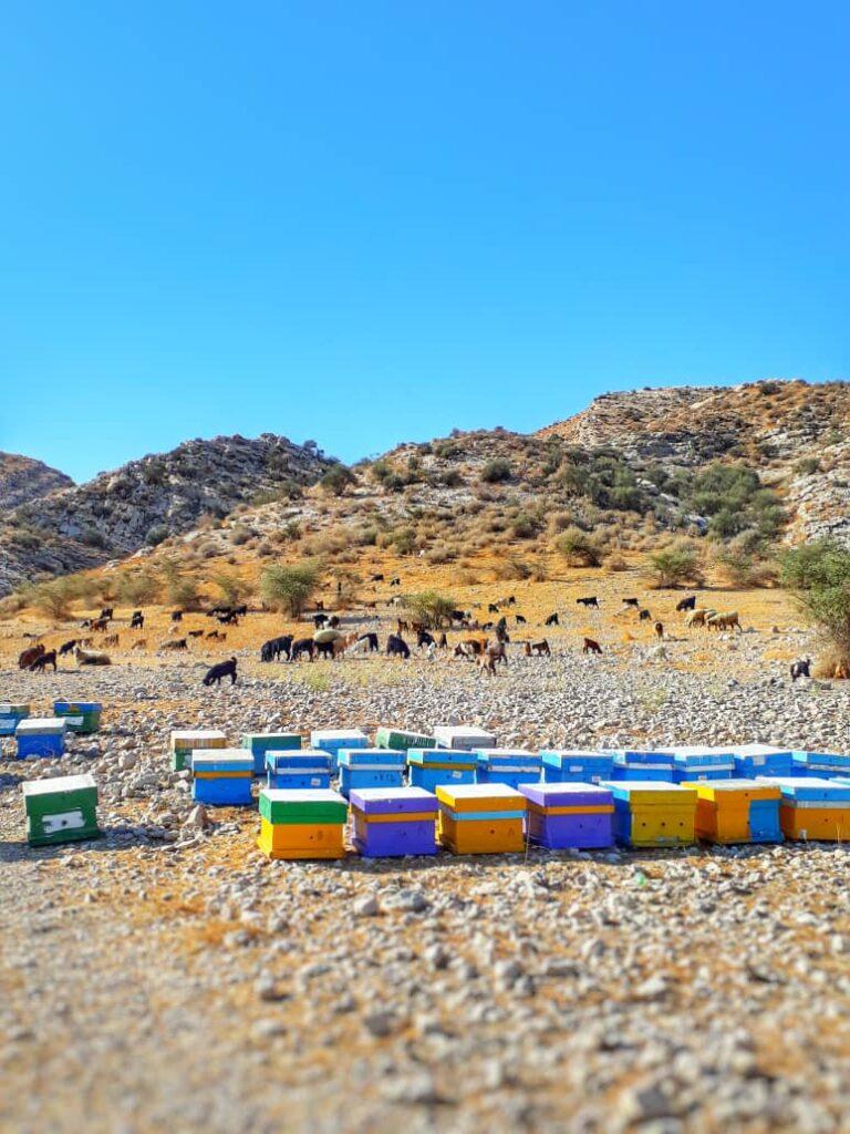 جشنواره عسل کنار- خواص عسل کنار-مجله باسلام