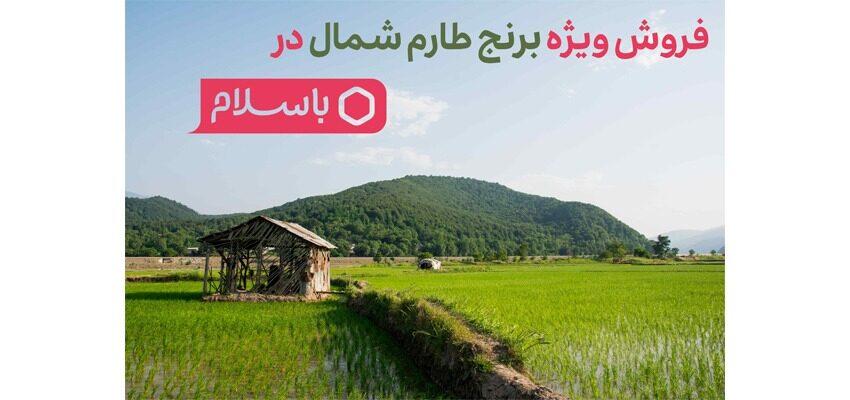 کمپین برنج- خرید برنج شمال- مجله باسلام