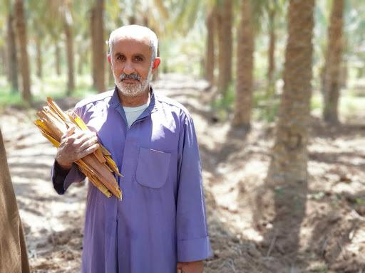 غلافهای درخت نخل-خواص عرق طارونه-مجله باسلام