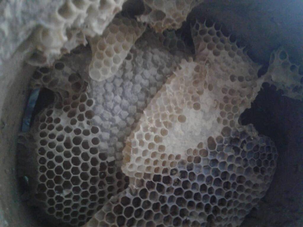 کوزه عسل درمانی- محصولات ارگانیک کردستان- مجله باسلام