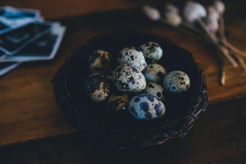 تخم بلدرچین-پرورش بلدرچین-مجله باسلام