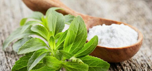 گیاه استویا-مجله باسلام
