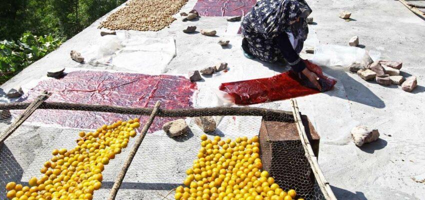 میوه خشک-باسلام-میوه خشک گاخ